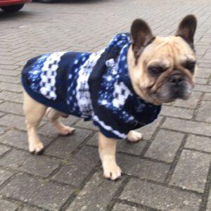 Sweaters Mops / Franse Bulldog